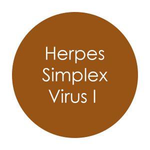 herpes-simplex-virus-i