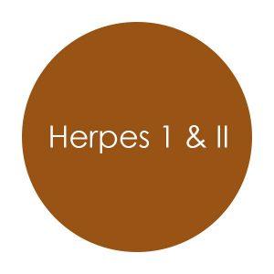 herpes_i_ii